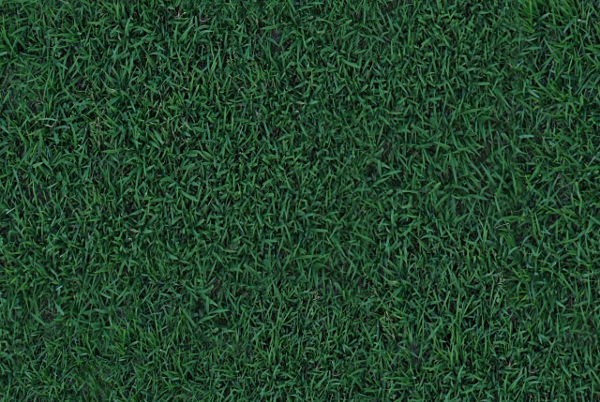 Tileable Grass Texture Free Download