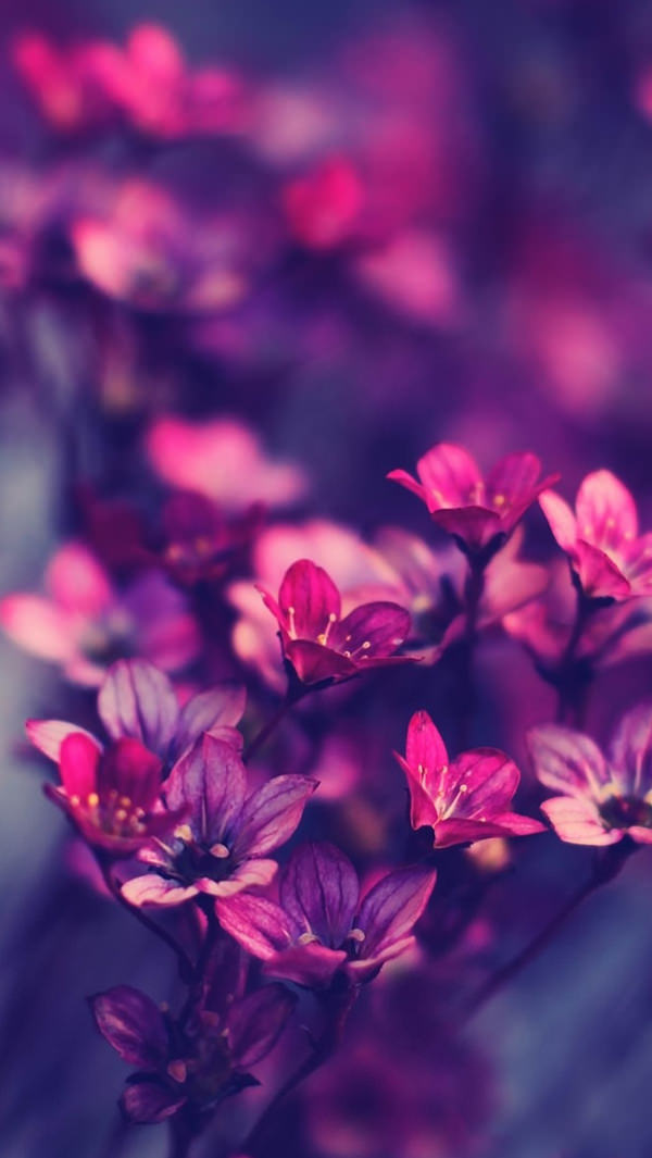 30 Free Purple Iphone Backgrounds Freecreatives