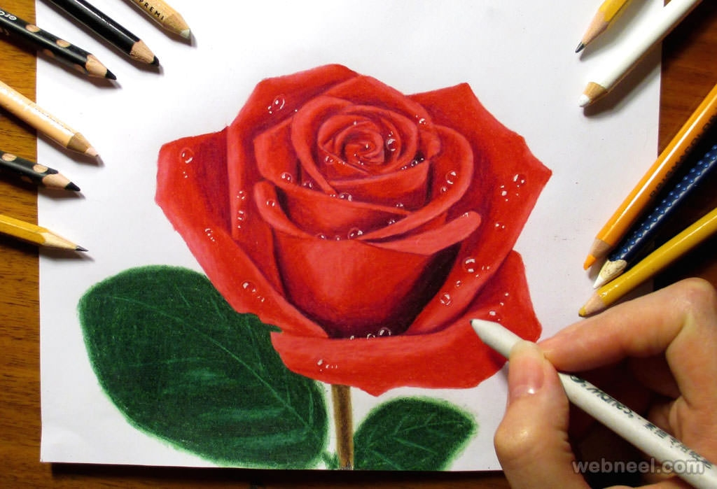 Rose Color Pencil Drawing For Free