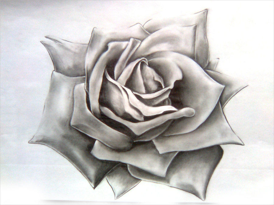 Fabulous Rose Drawing For You