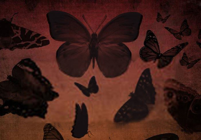 20 Butterfly Photoshop Brushes