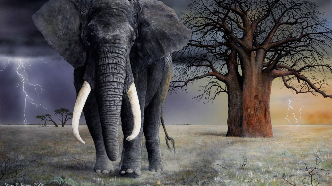Amazing Elephant Background For Free