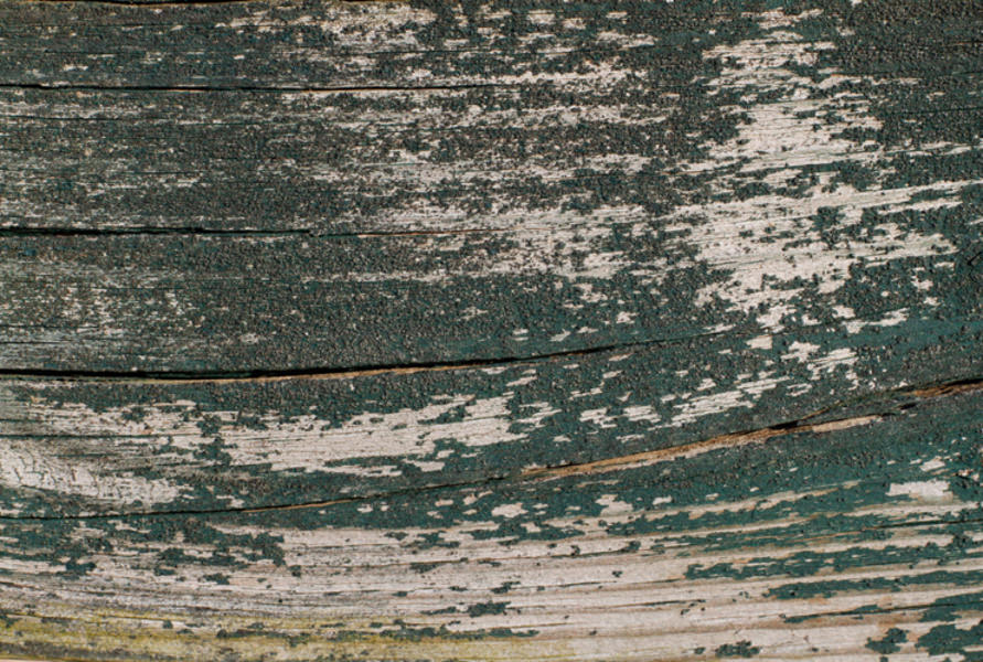 Amazing Peeled Wood Textures For Free