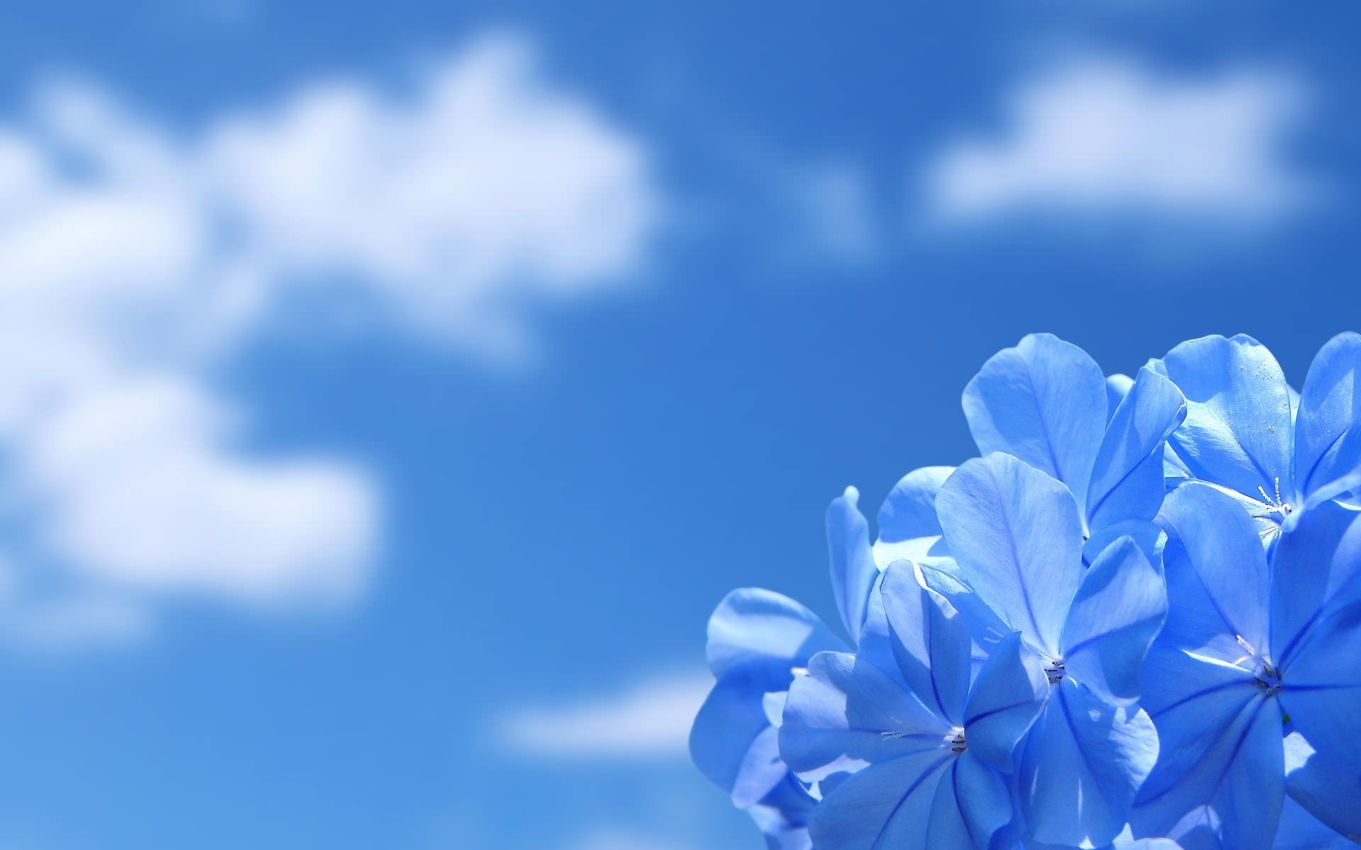 Astonishing Blue Flower Background
