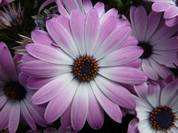 Astonishing Purple Flowers Background
