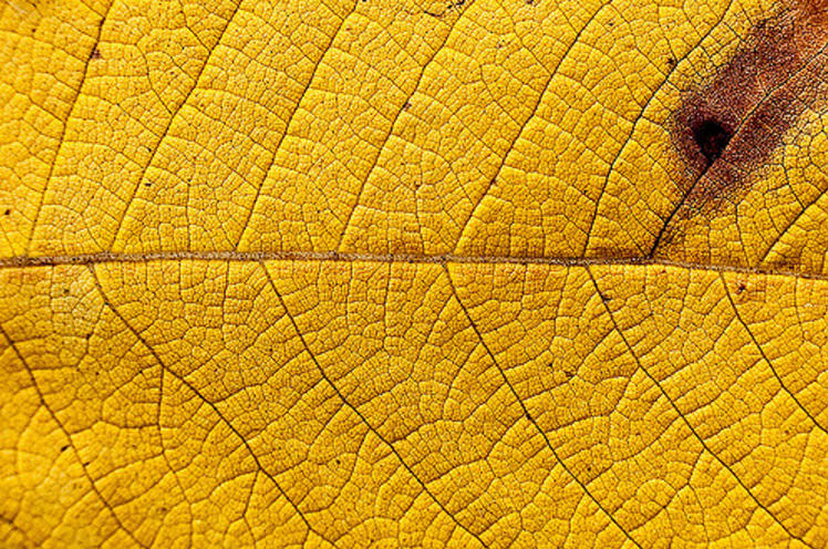 Awesome Yellow Leaf Texture For Free