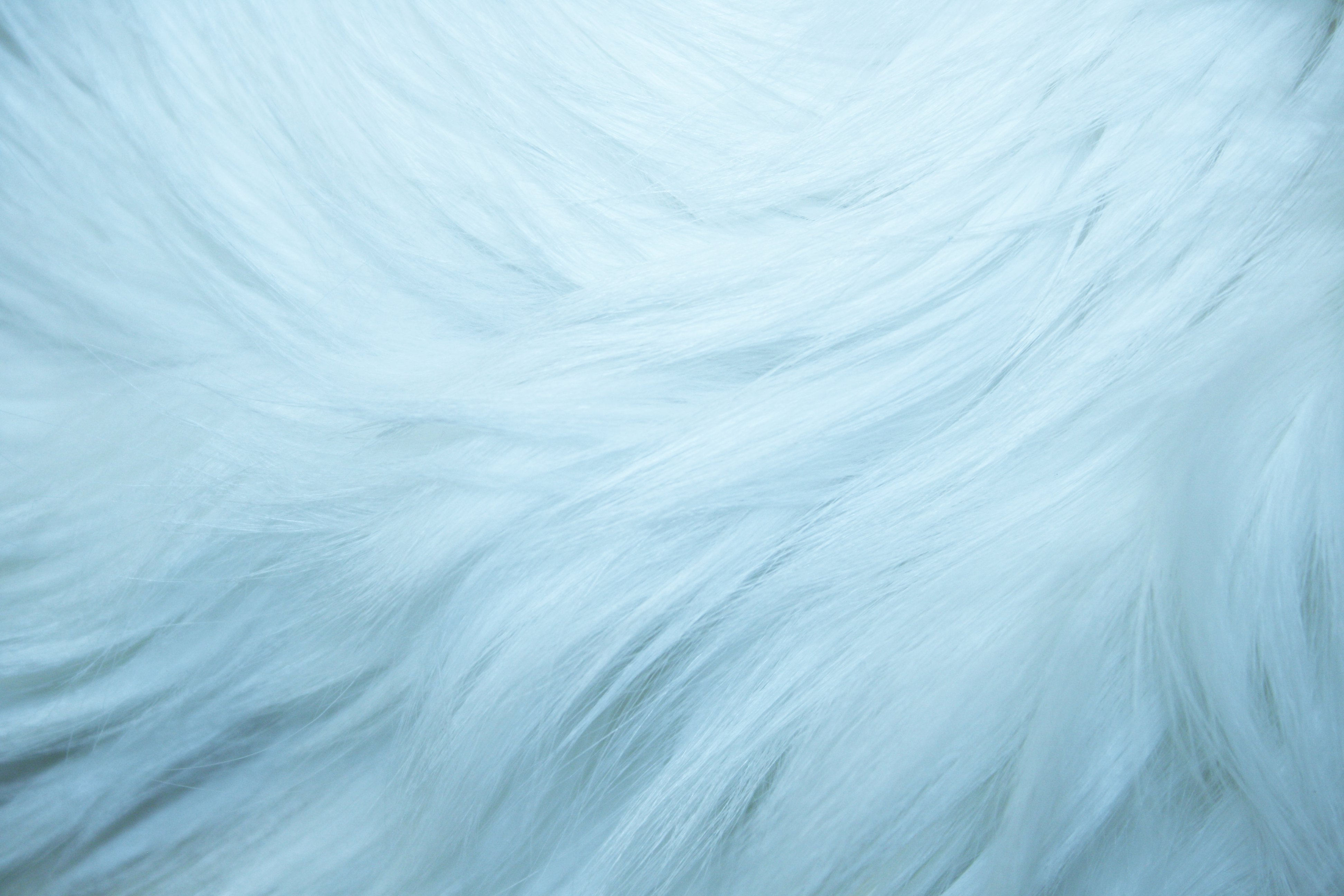 Baby Blue Fur Background For You