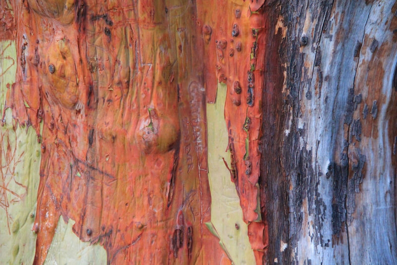 Bark Peeled Wood Textures For Free