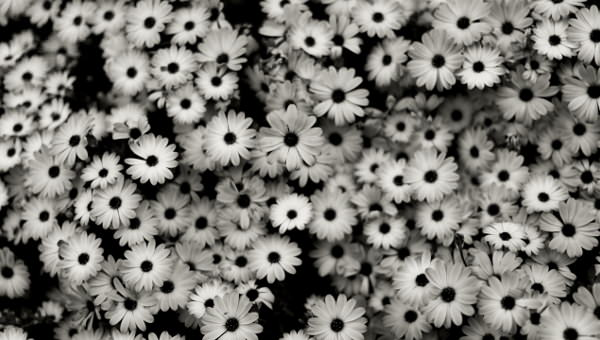 Free 12 Black White Floral Wallpapers In Psd Vector Eps