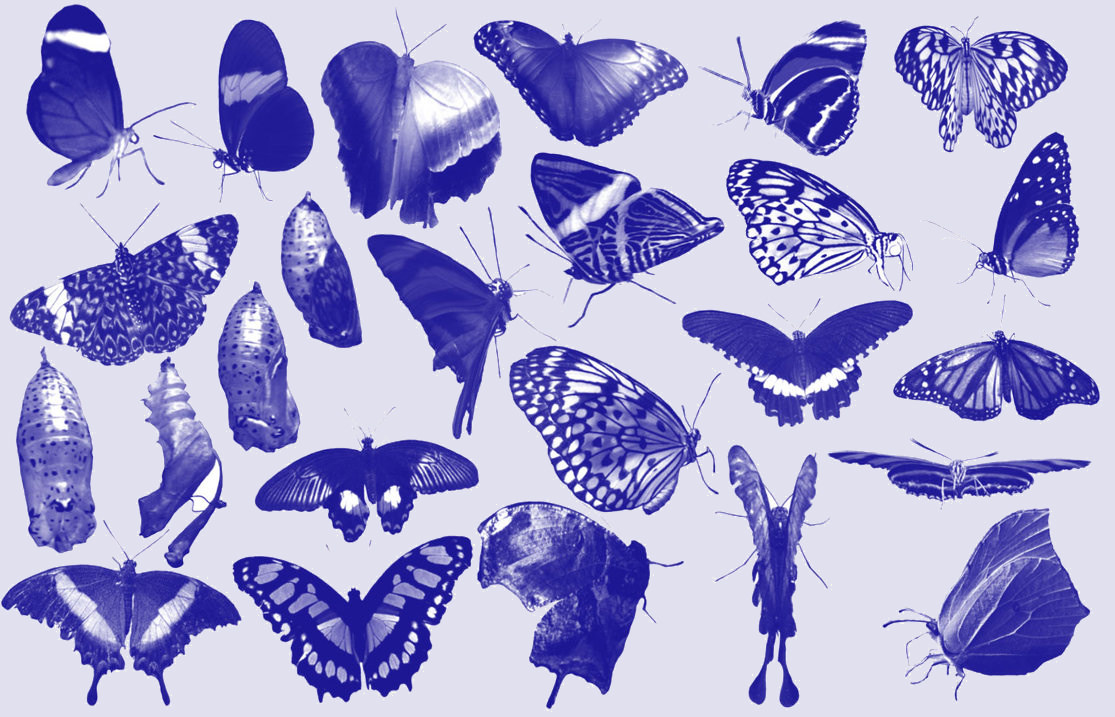 Beautiful Blue Butterfly Photoshop Brushes