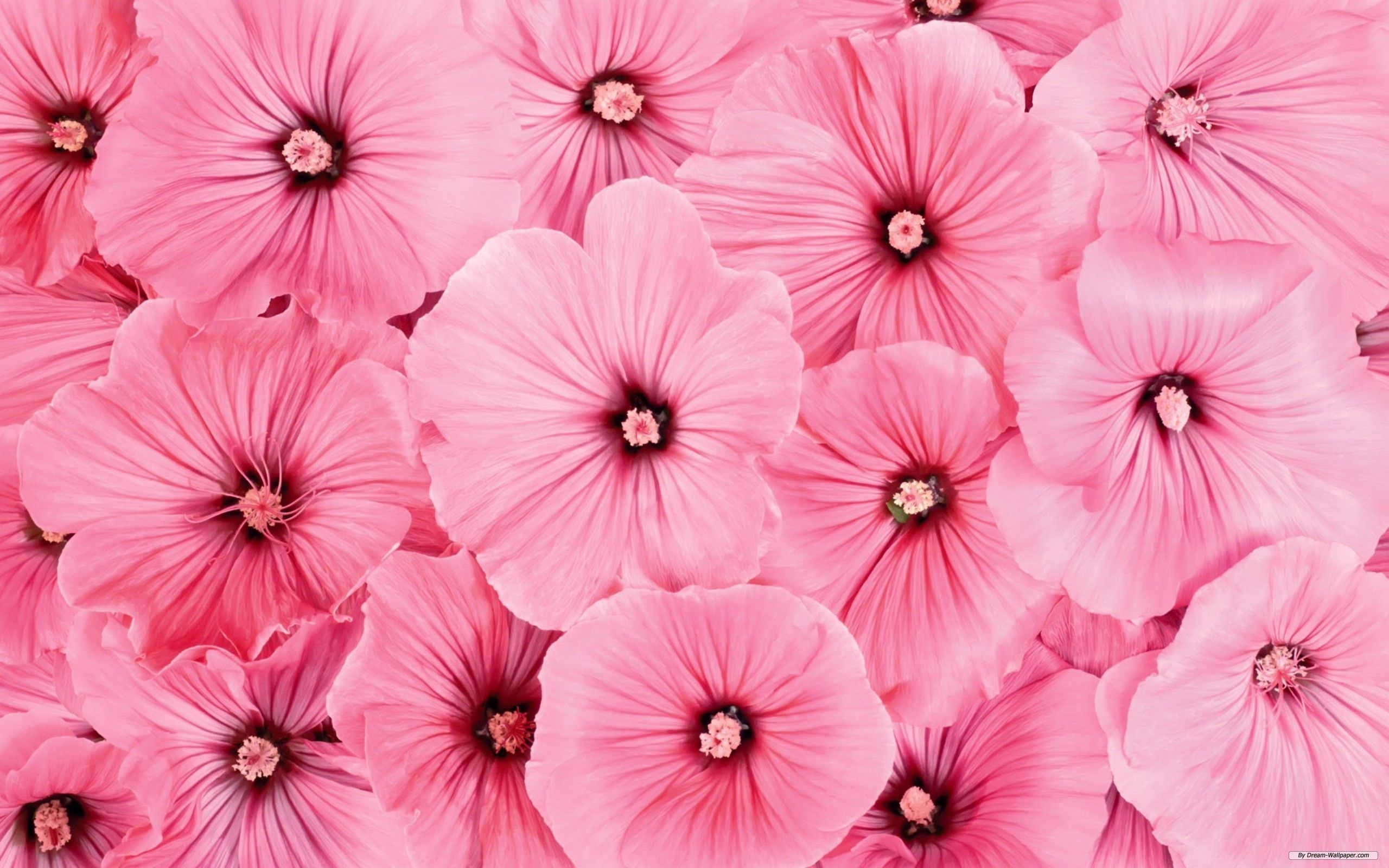 Beautiful Pink Floral Wallpaper