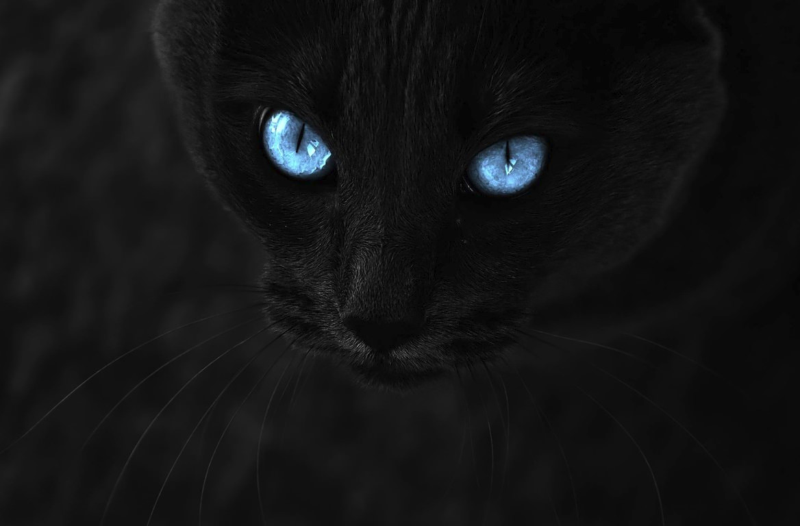 Black Cat with Blue Eyes Background