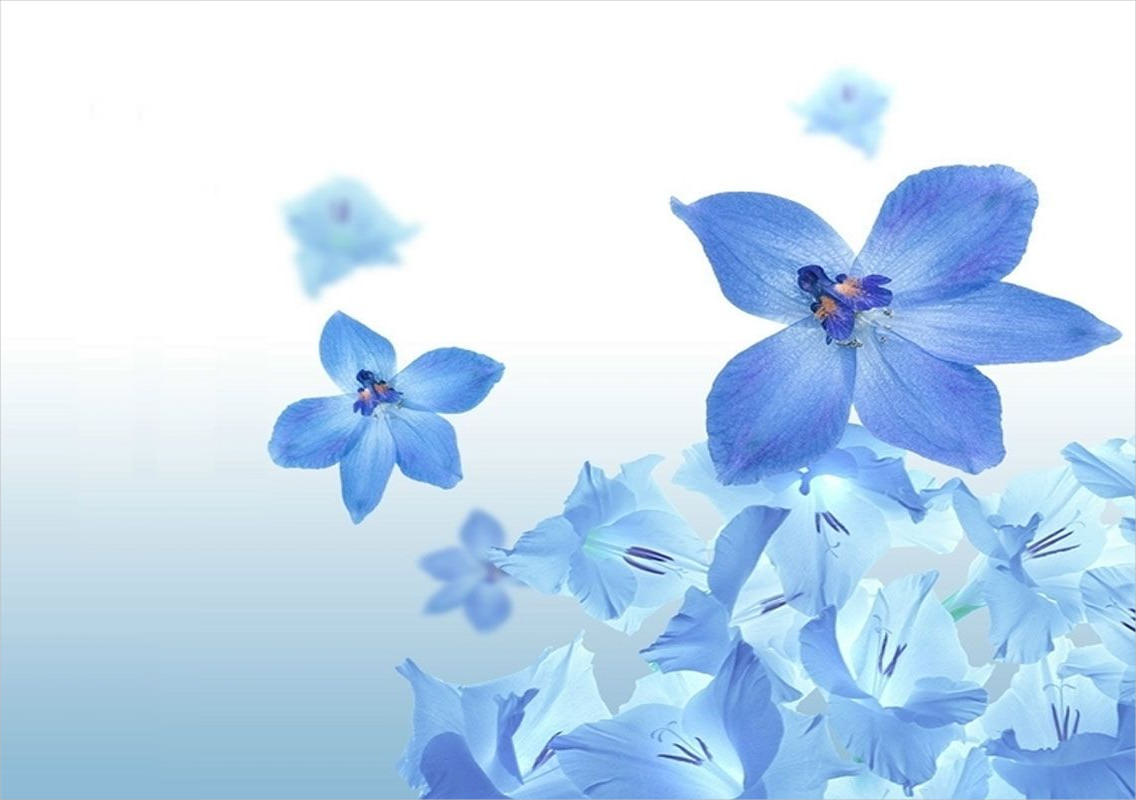 Blue Flower Background For Download