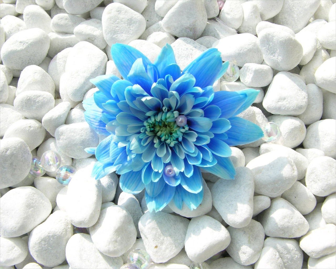 Blue Flower Background For Free