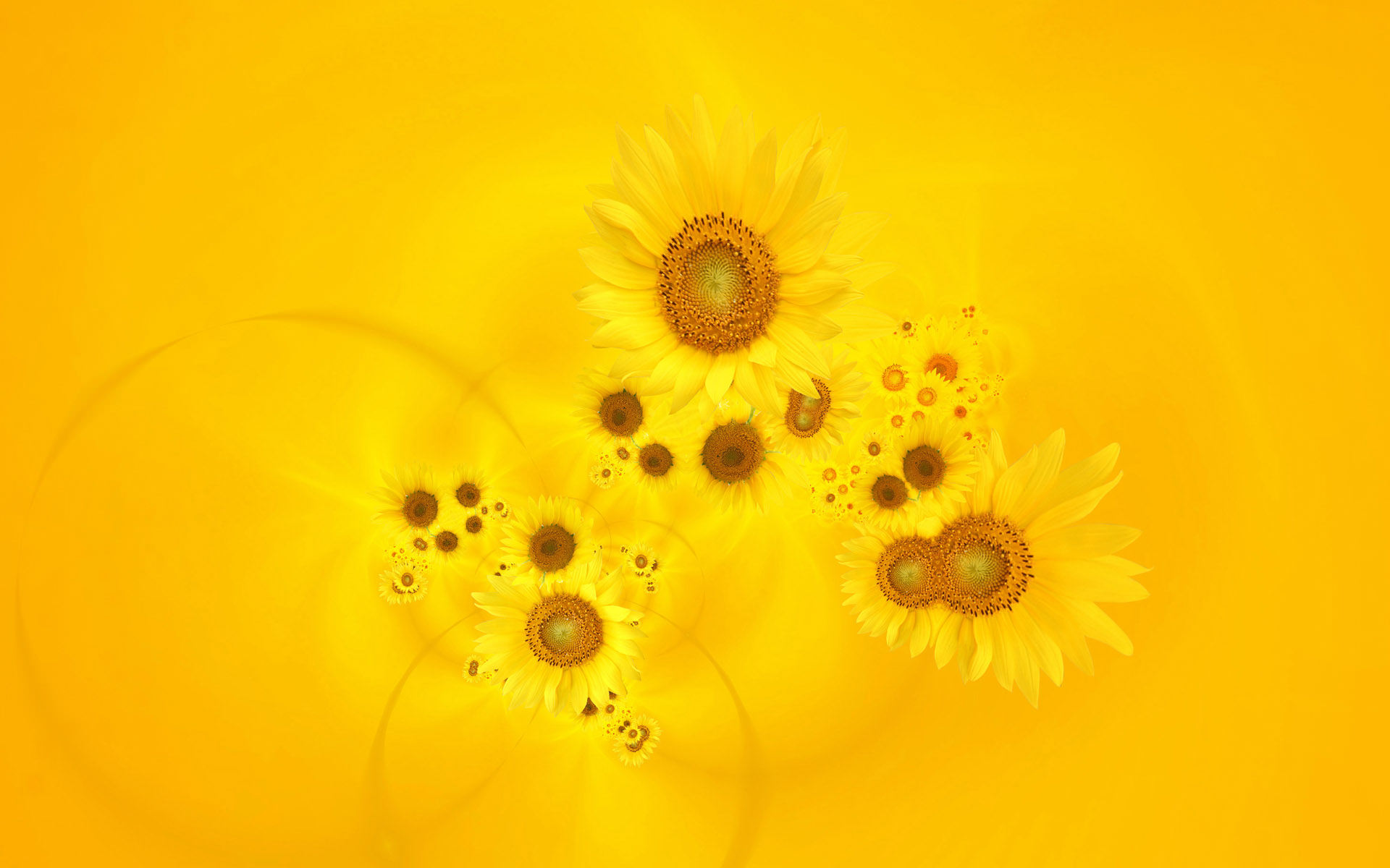 Bright Yellow Sunflowers Background