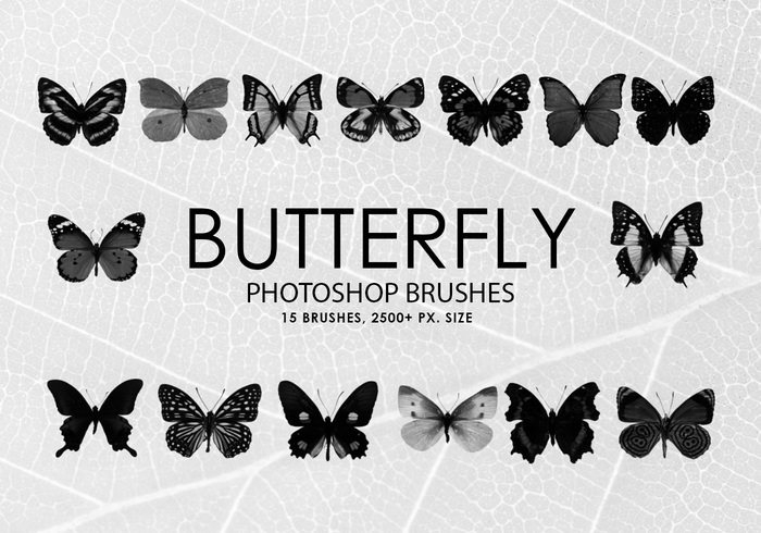 Butterfly Photoshop Brushes Collection