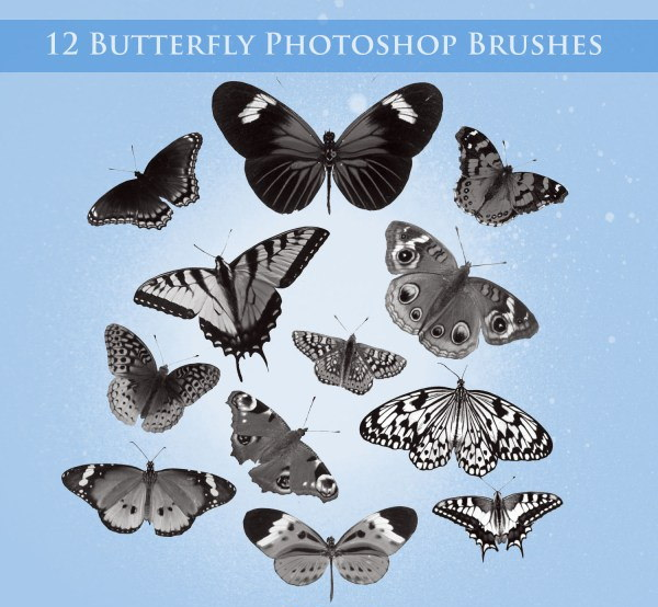 Butterfly Photoshop Brushes for Free