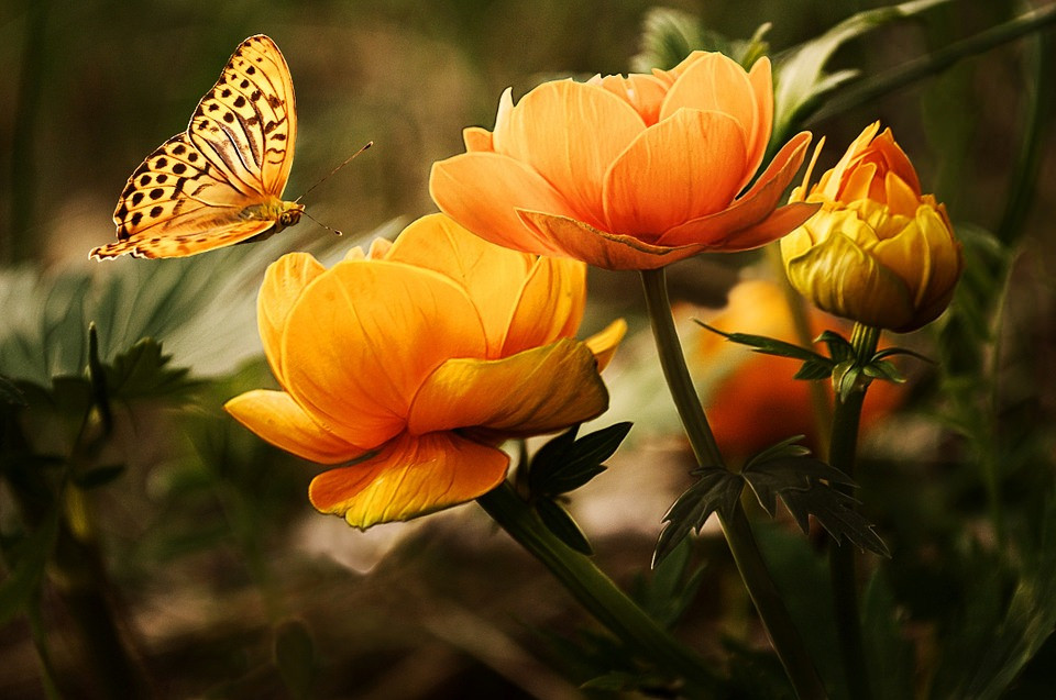 Butterfly on Yellow Flower Cool Background