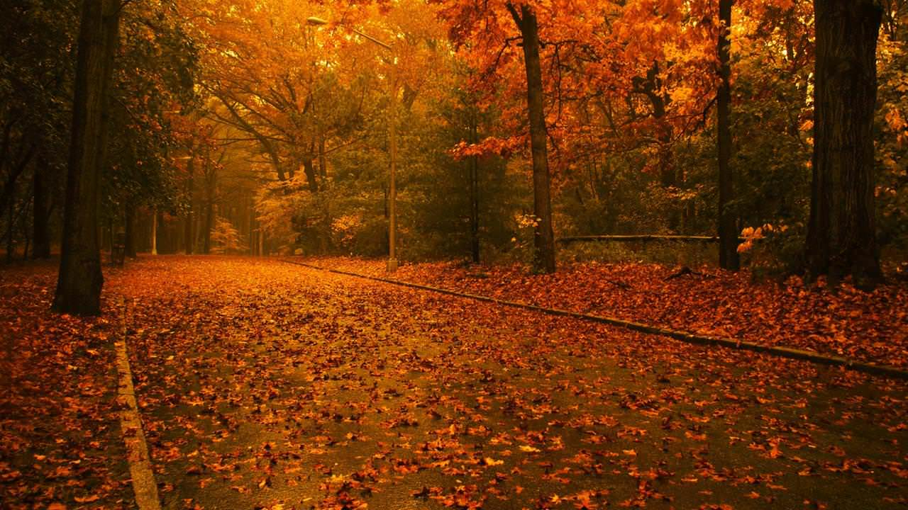 Colors of Autumn Wallpaper