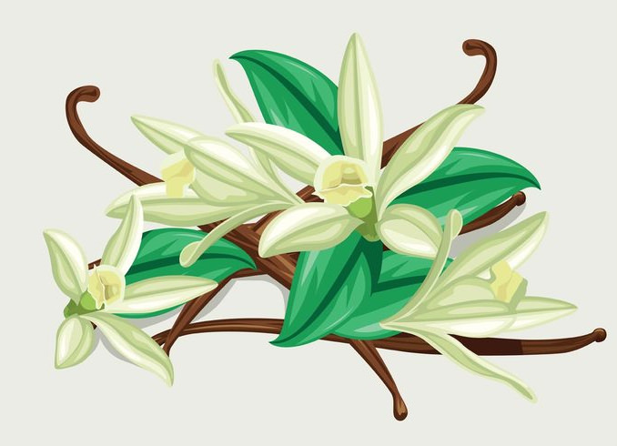 Cool Vanilla Flower Vector Background