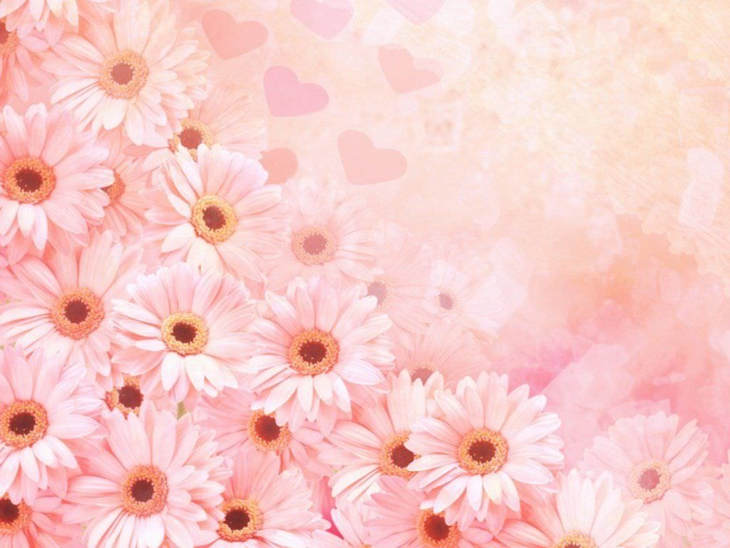 Cute Flower Background For Download