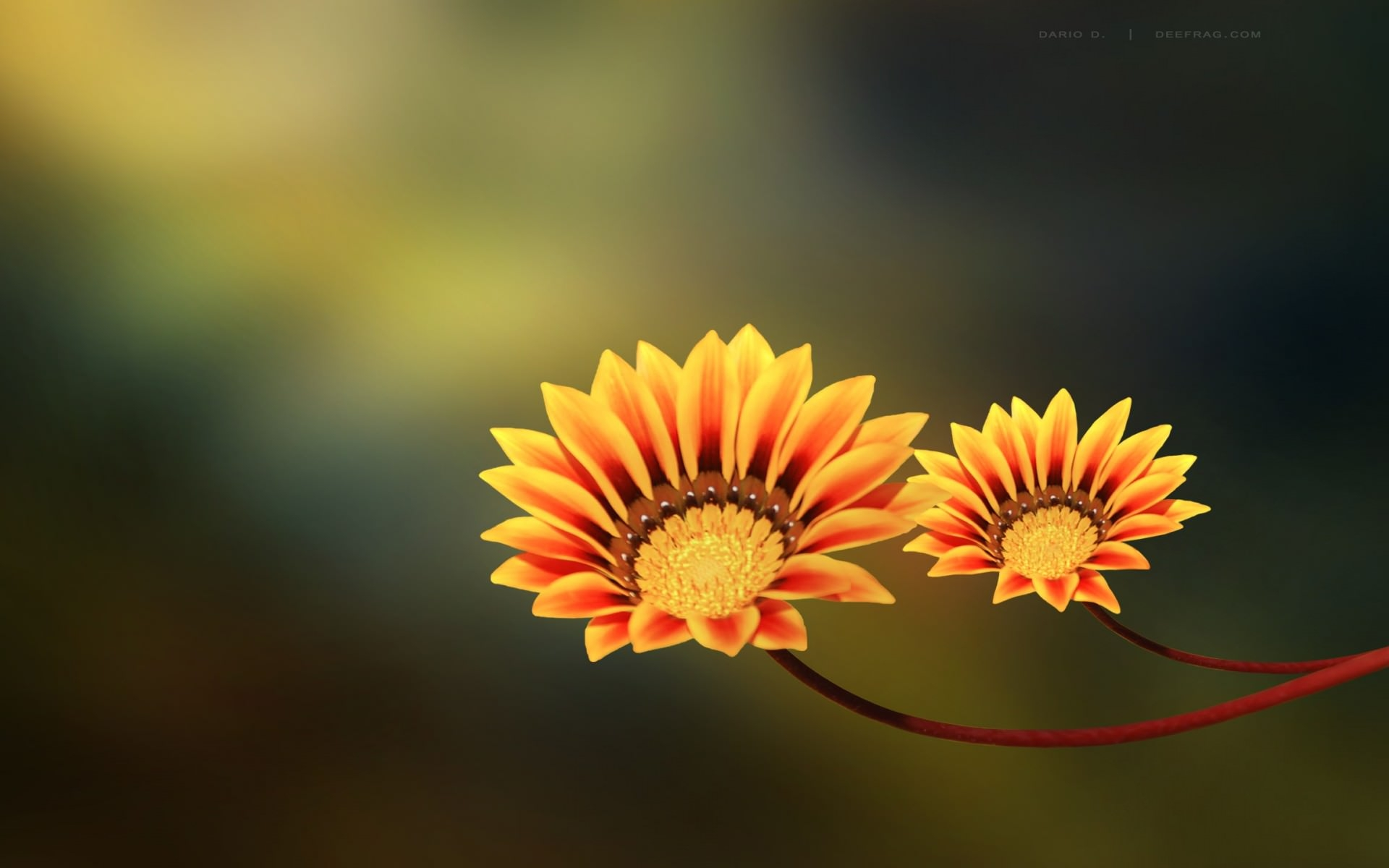 Cute Flower Background For You