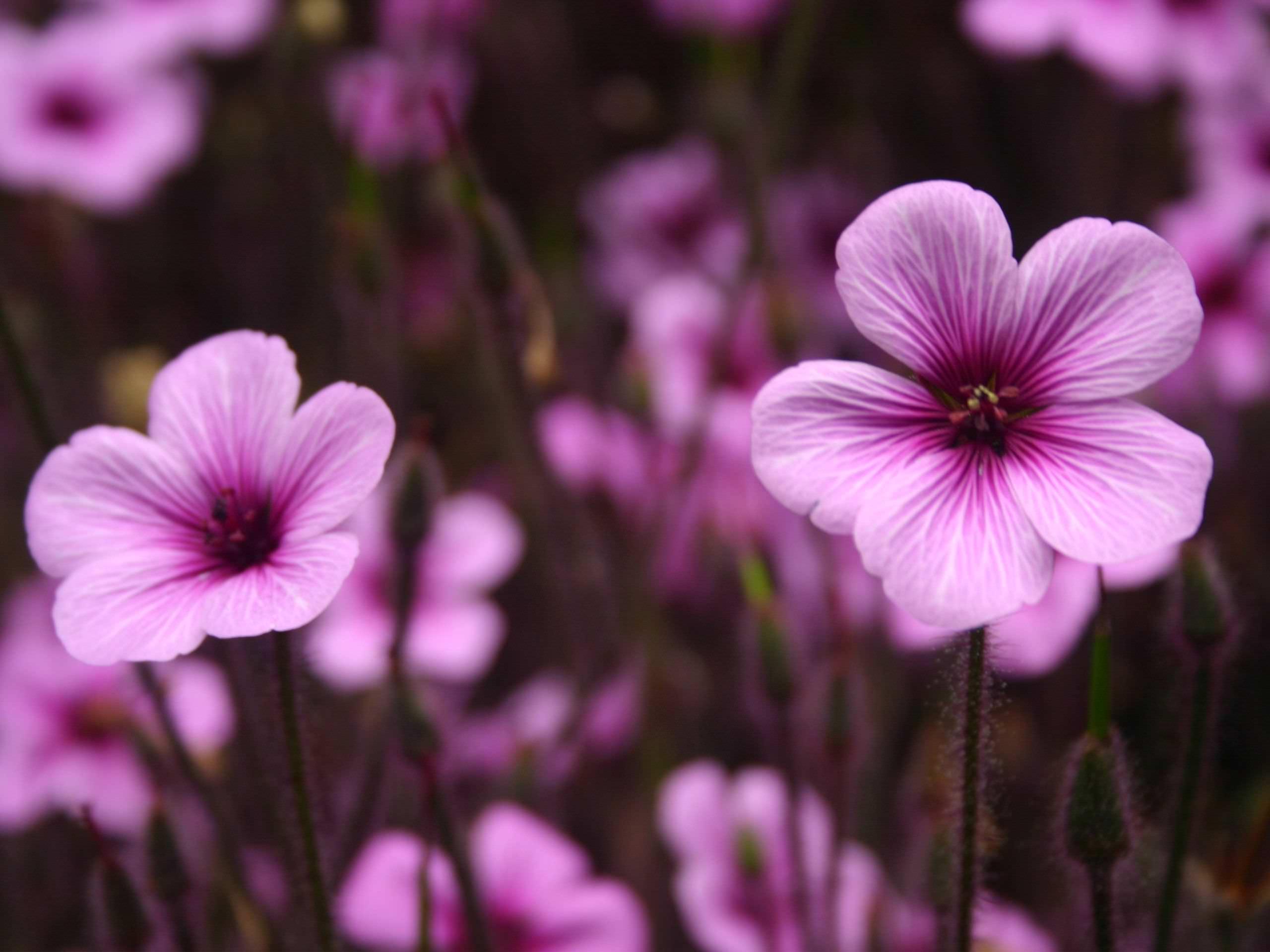 Cute Purple Flower Background