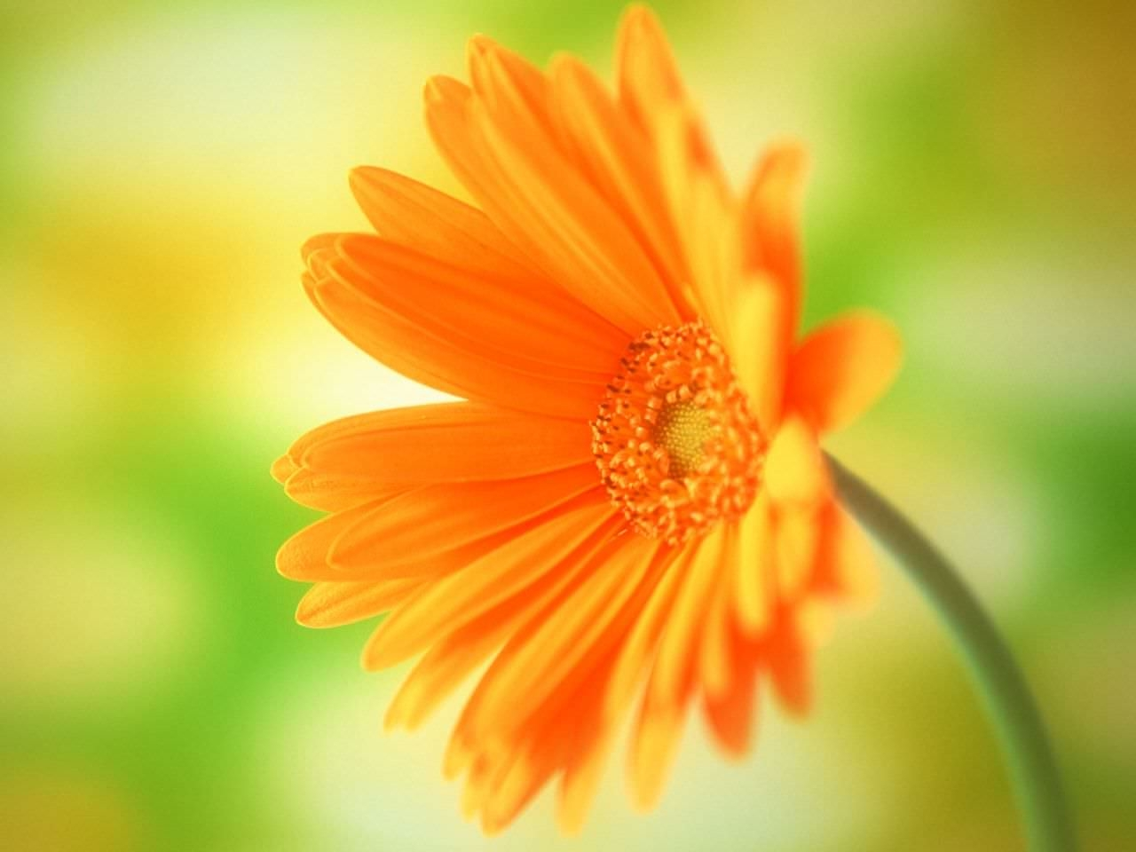 amazing flowers background 1600x1200 - photo #27