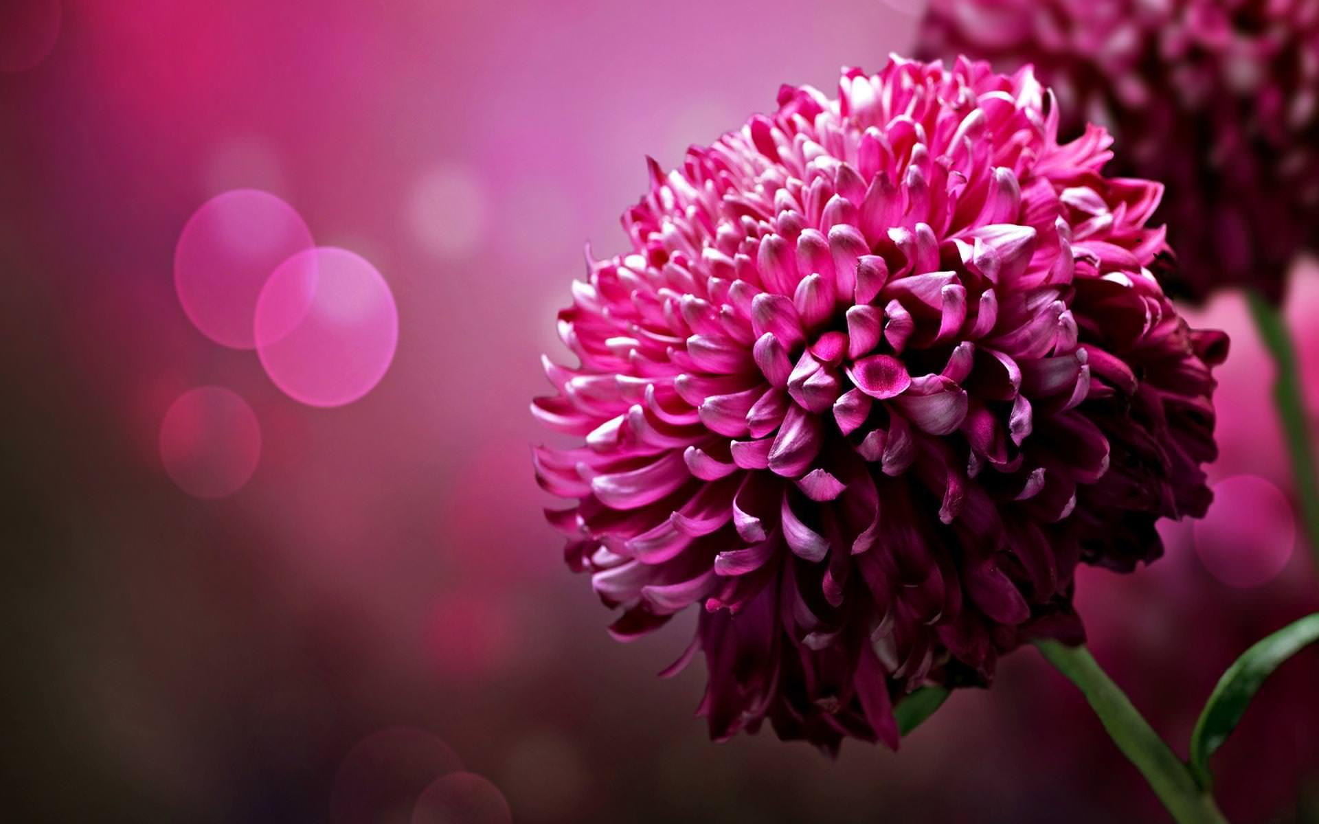 Desktop Flower Background