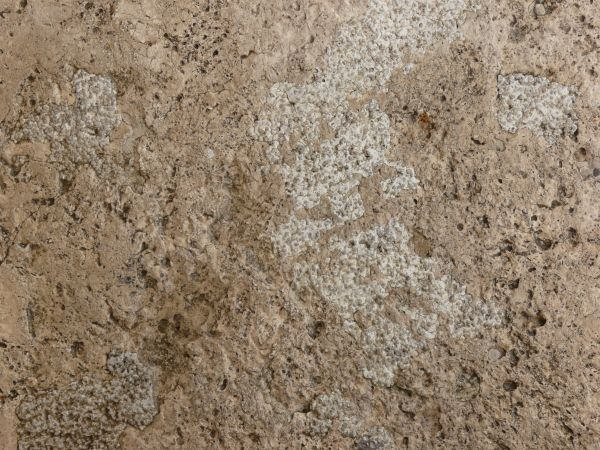 Download Free Rough Concrete Texture