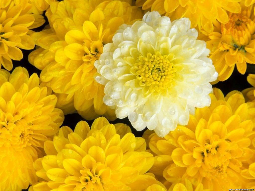 Elegant Flower Background