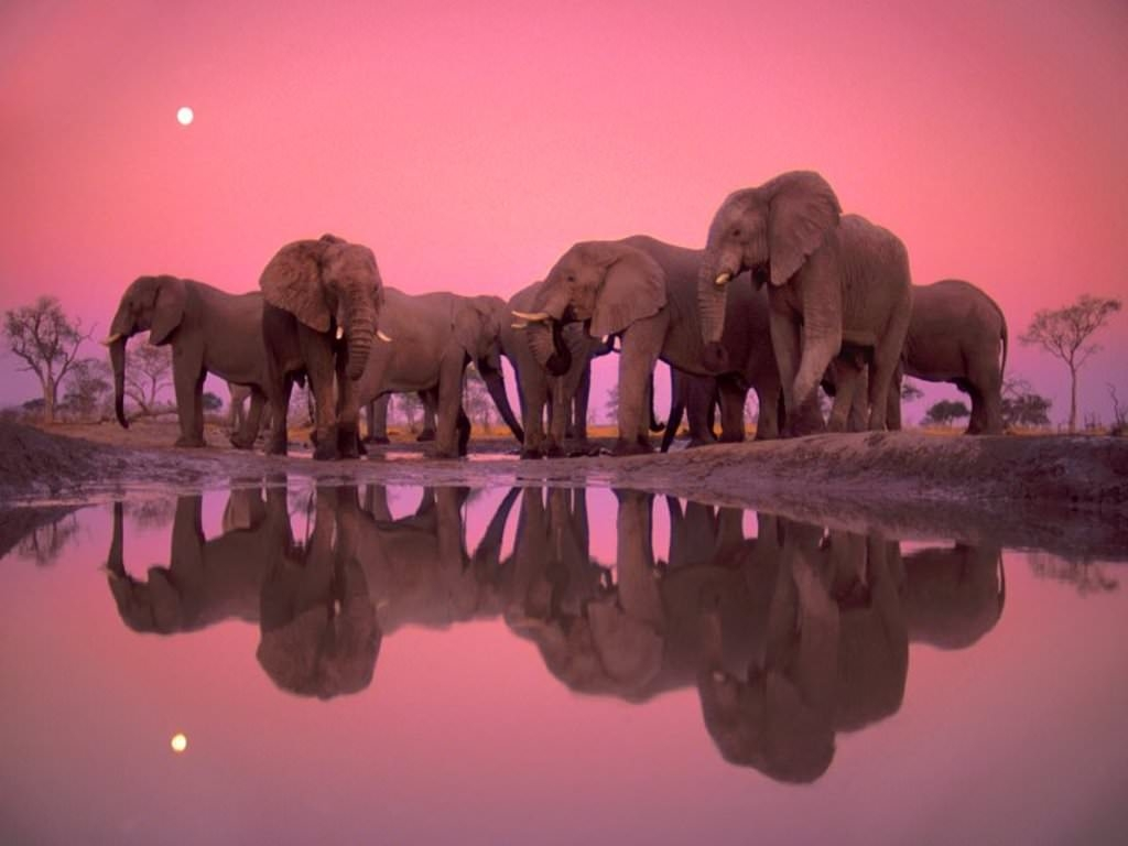 Elephant Abstract WallPaper For Free