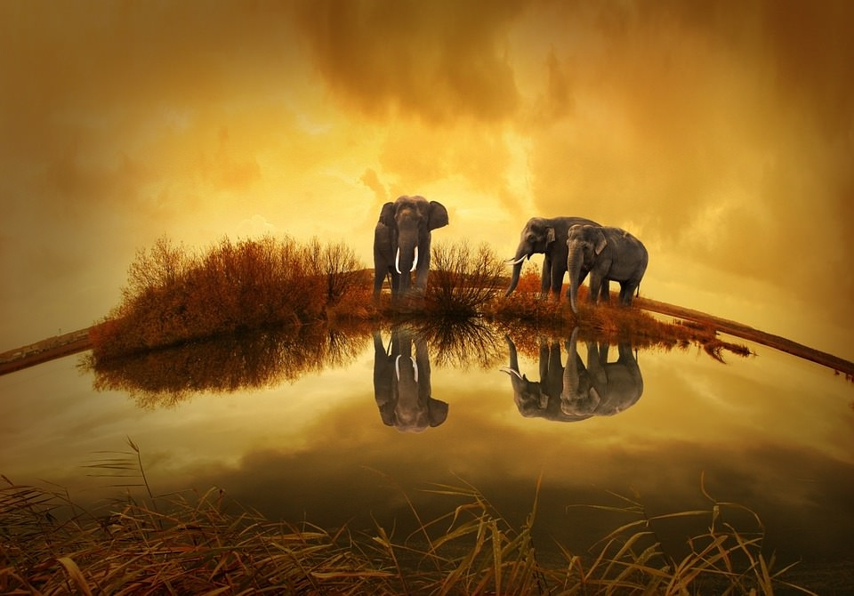 Elephant Sunset Background For Free