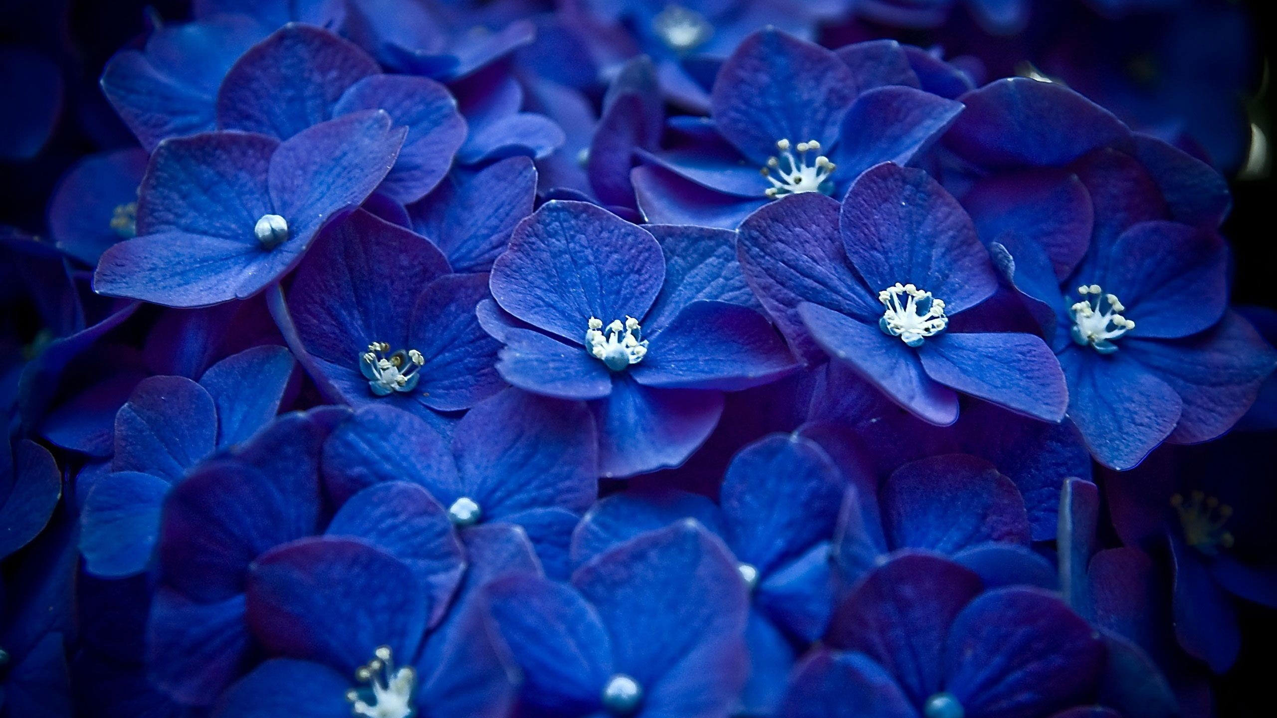 Extraordinary Blue Flower Background