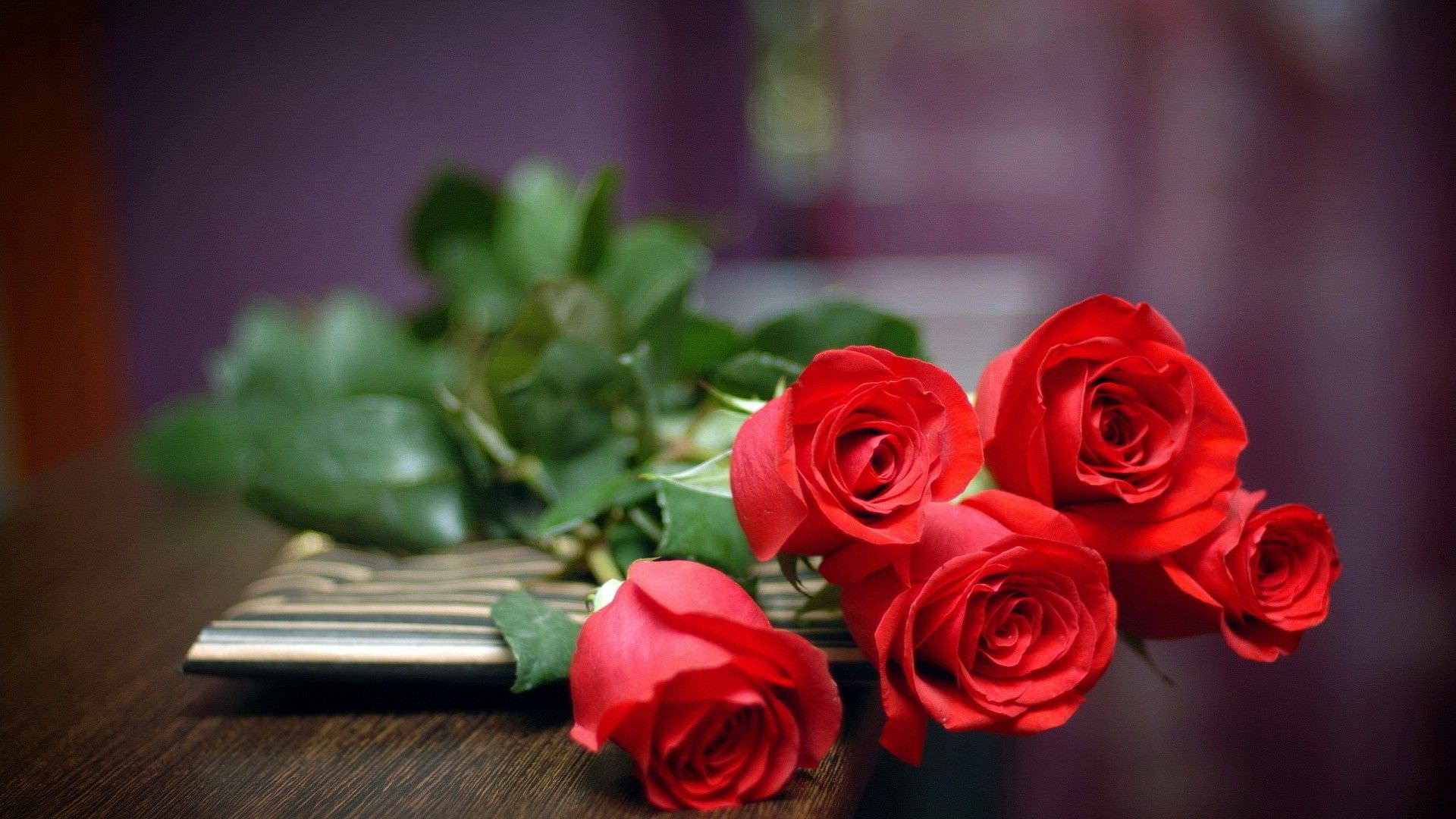 Fabulous Rose Flower Background