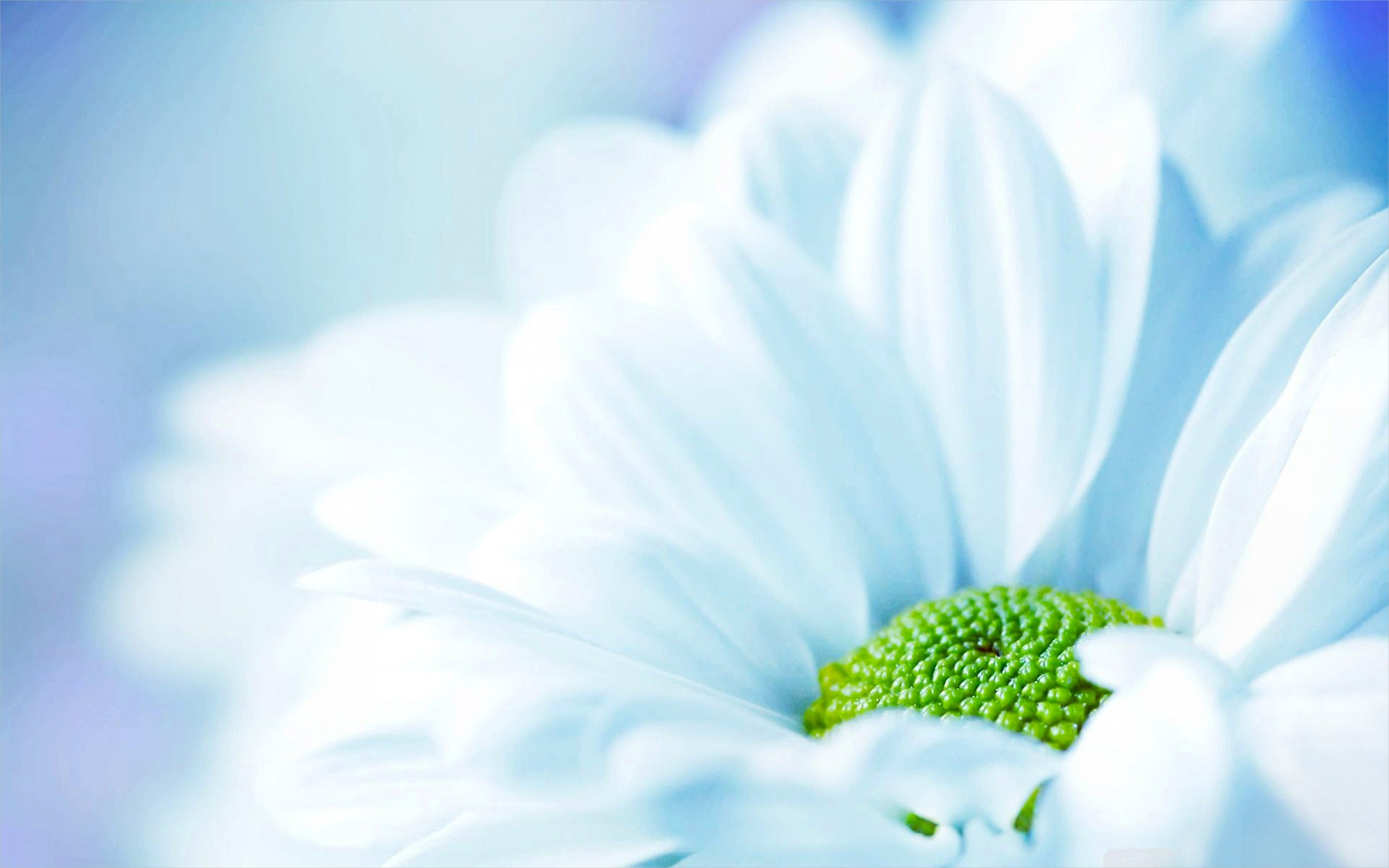Fabulous White Flower Background