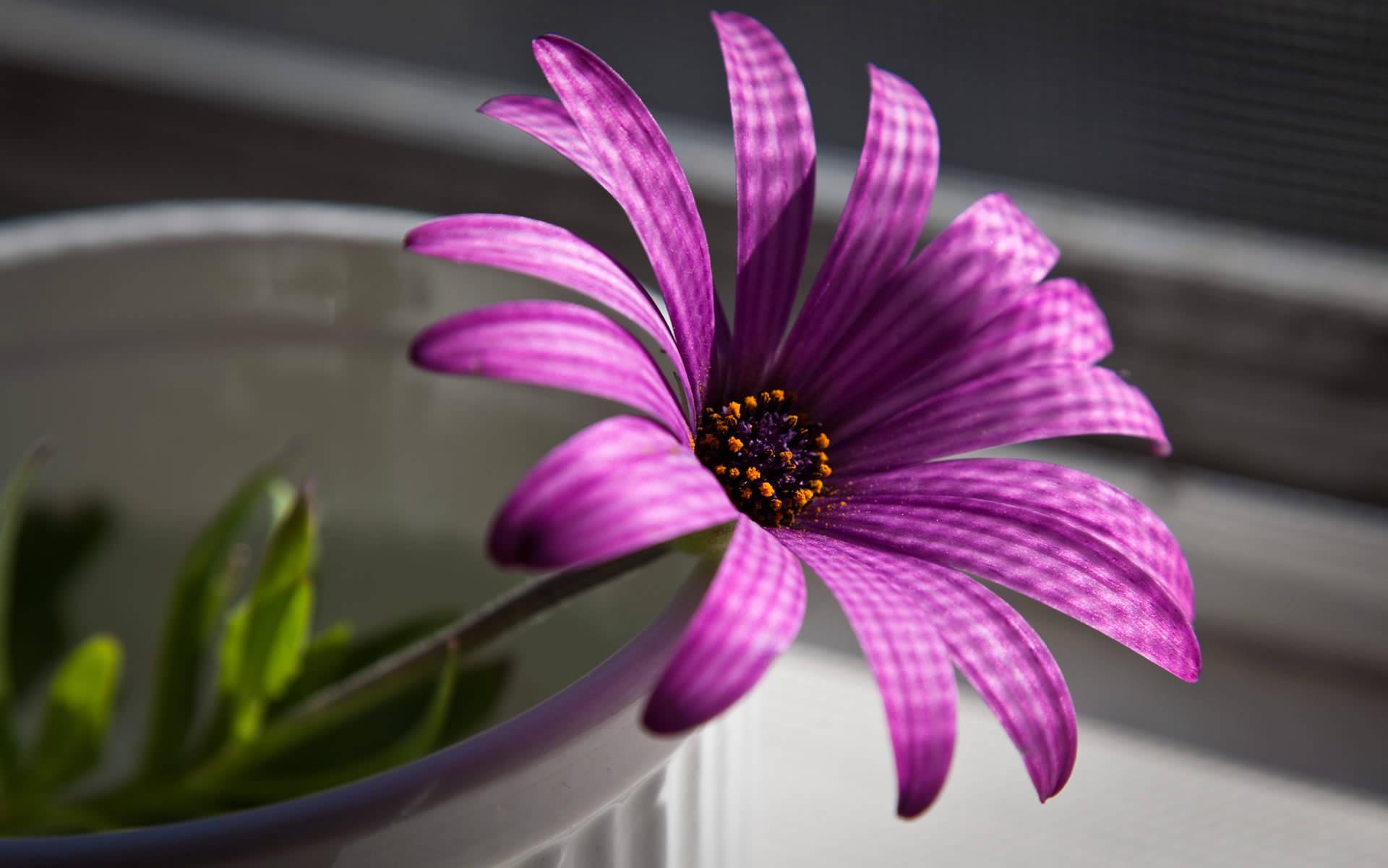 Fantastic Purple Flower Background