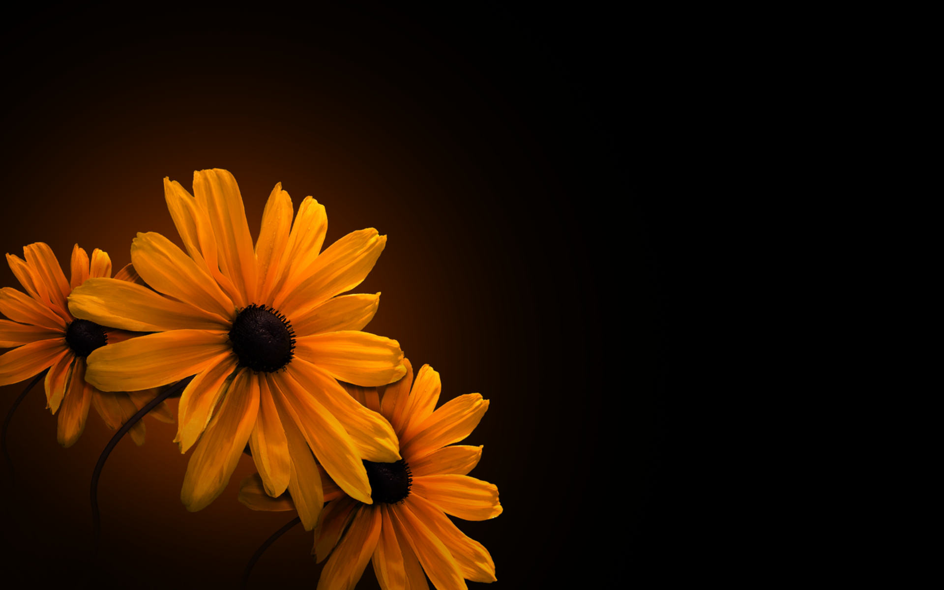 Fantastic Yellow Flowers Background