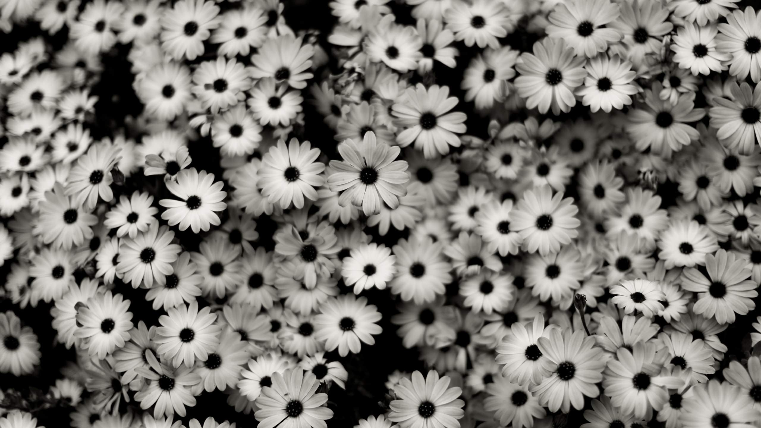 Fascinating Black and White Floral Wallpaper