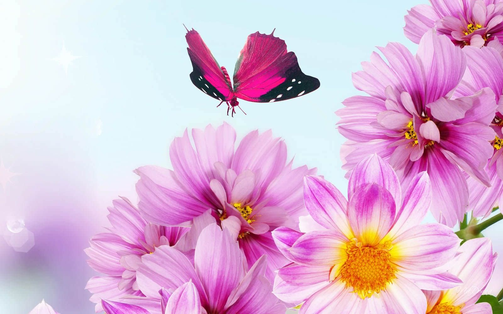 Flower Background Wallpaper with Cute Butterfly