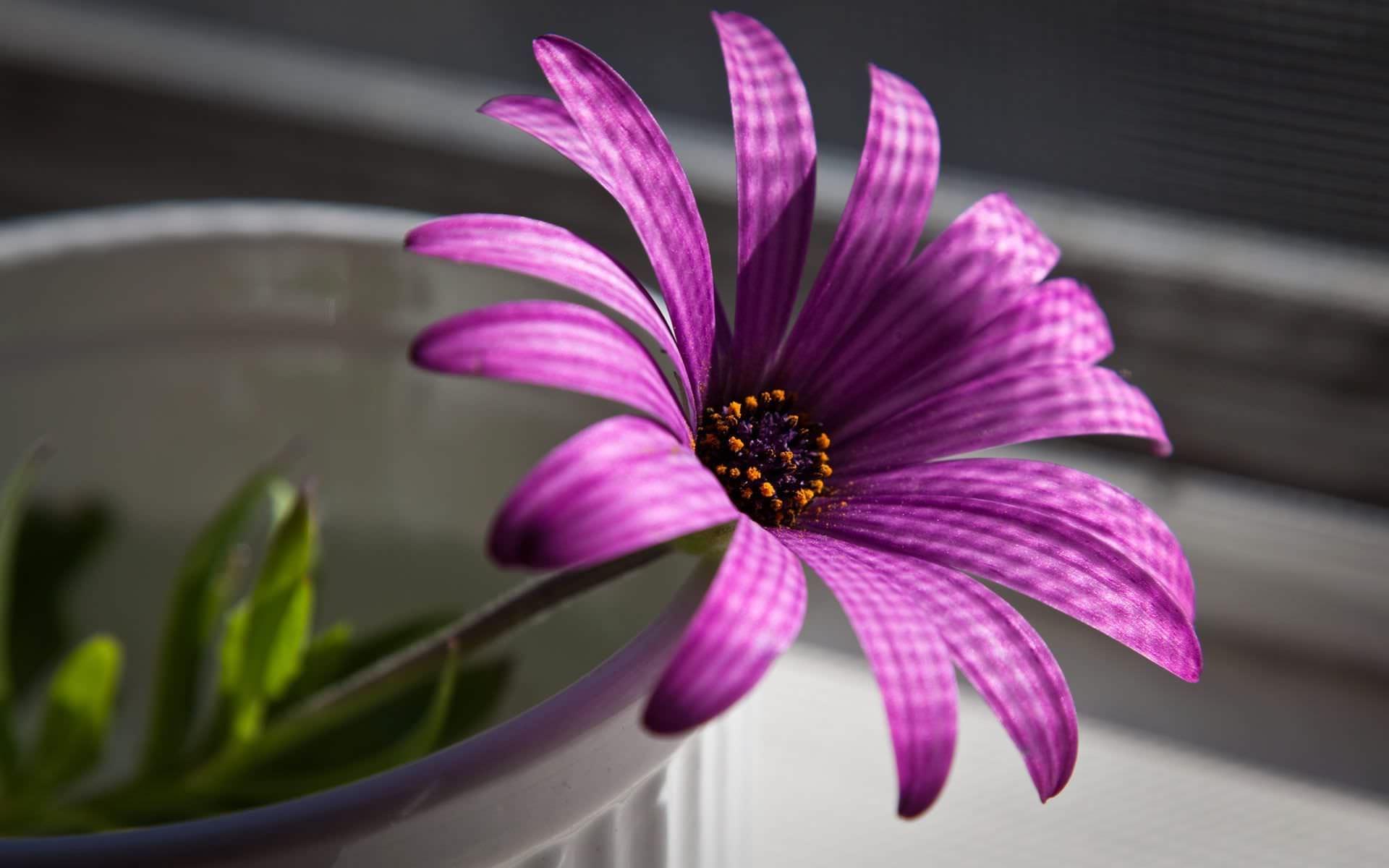 Flower Background for Desktop