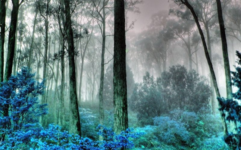 Foggy Mysterious Forest Background