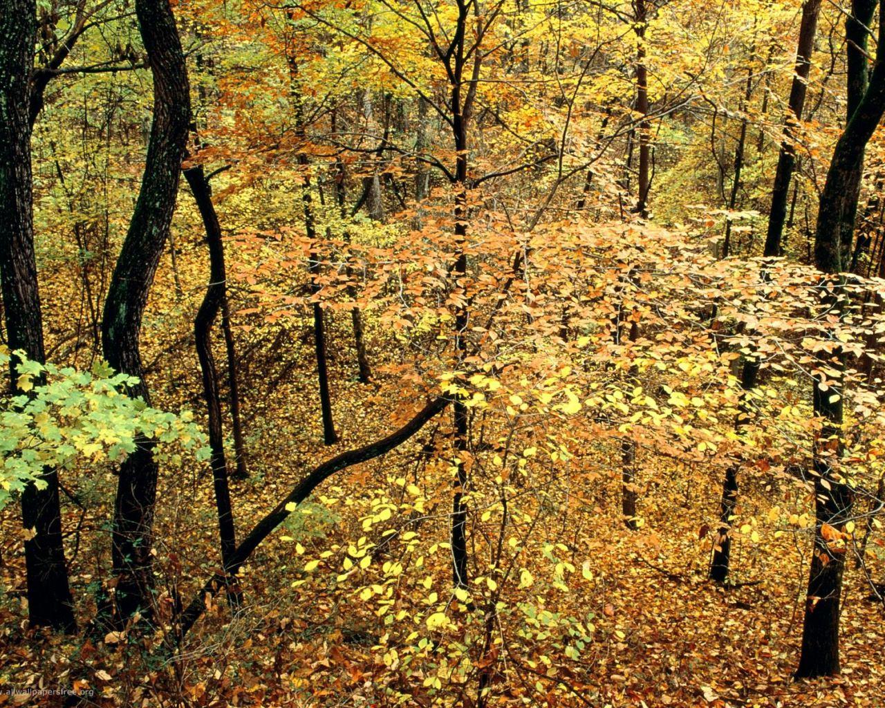 Forest Foilage Background For Free