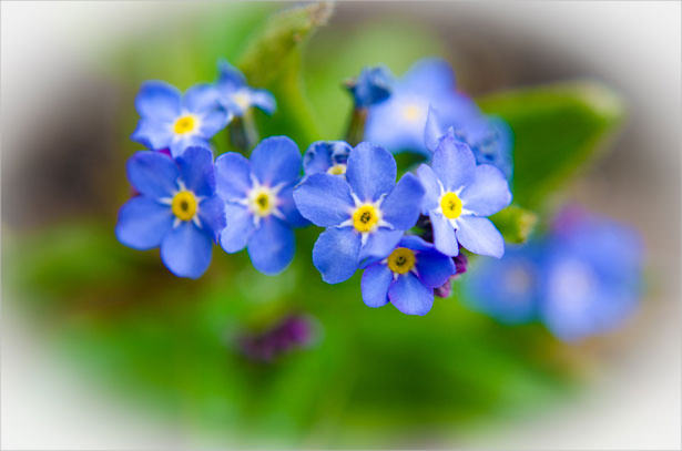 Free Blue Flower Background For You