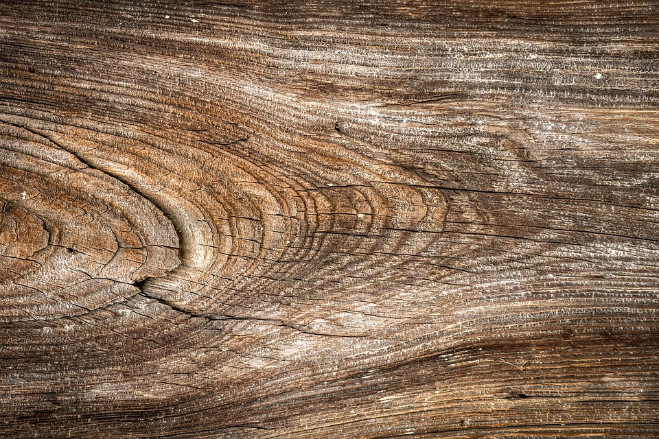 Free Wild Hardwood Background