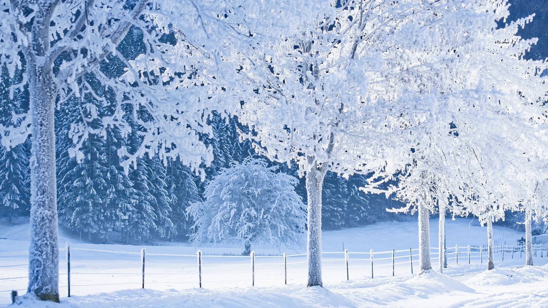 Frozen Forest Background For Free
