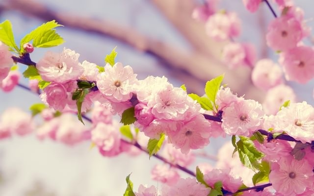 Gorgeous & Cute Flower Background