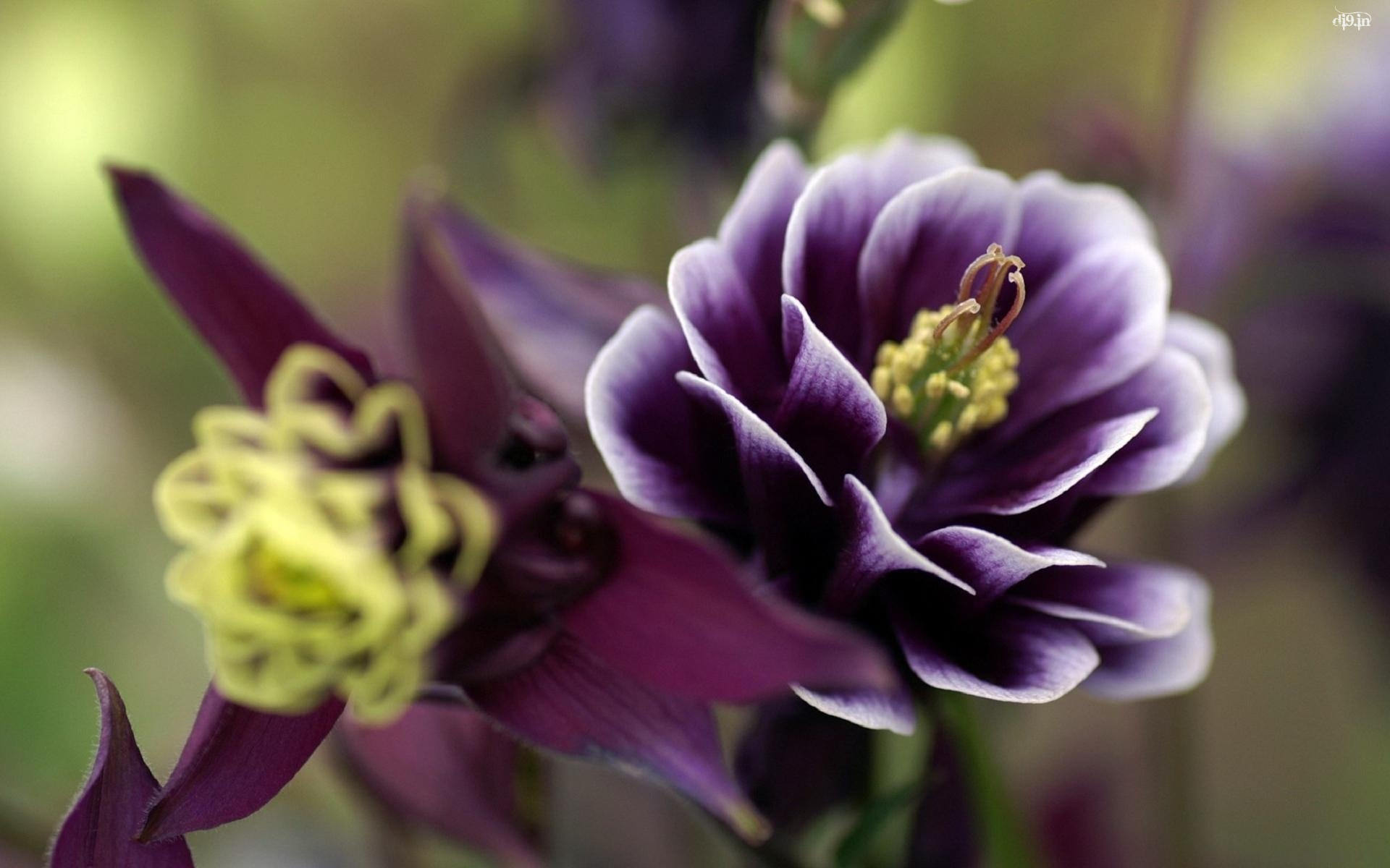 Gorgeous Purple Flower Tumblr Background
