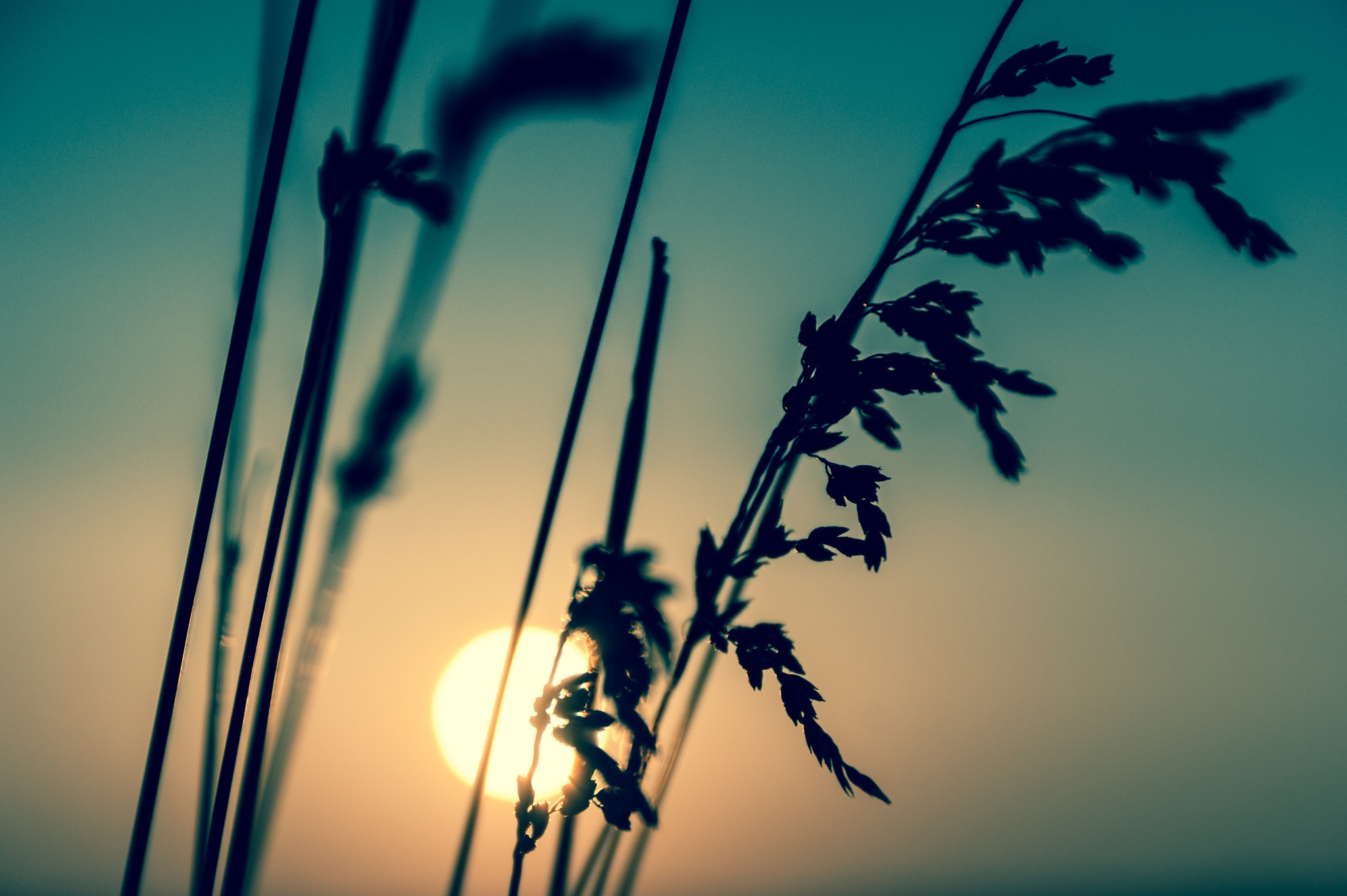 Gorgeous Vintage Sunset Background