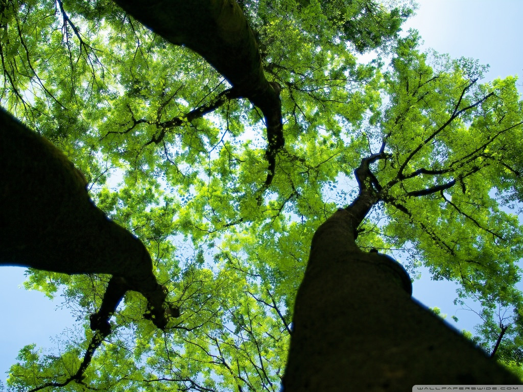 Green Forest Background For Free